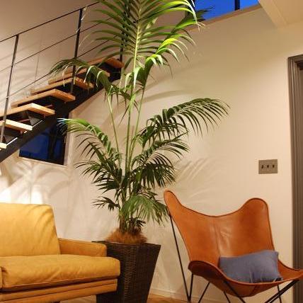 納品ブログ-シンボルツリーとお気に入り家具のコーディネート-